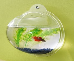 wall-mounted-fish-tank